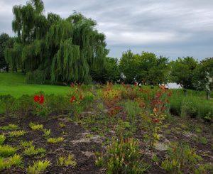 Free Webinar: 48,000 Plants and Trees Take Root
