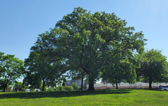 Urban Forests are a Sustainable Solution for Environment and Health
